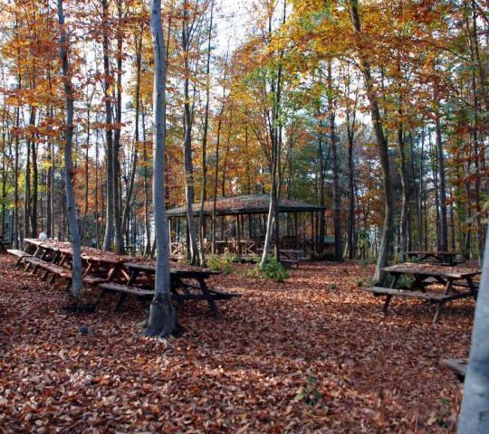 Ünye Asarkaya Kent Ormanı