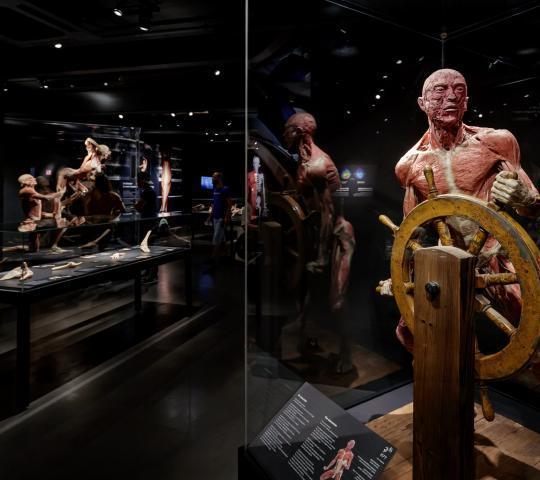 Body Worlds Anatomi Müzesi