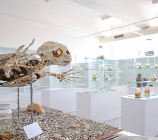 Kıbrıs Herbaryum ve Doğa Tarihi Müzesi