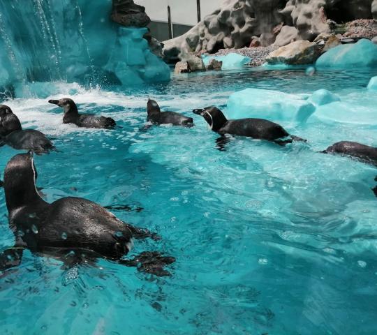Belgrad Hayvanat Bahçesi (Beo zoo vrt)