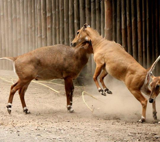 Kiev Hayvanat Bahçesi