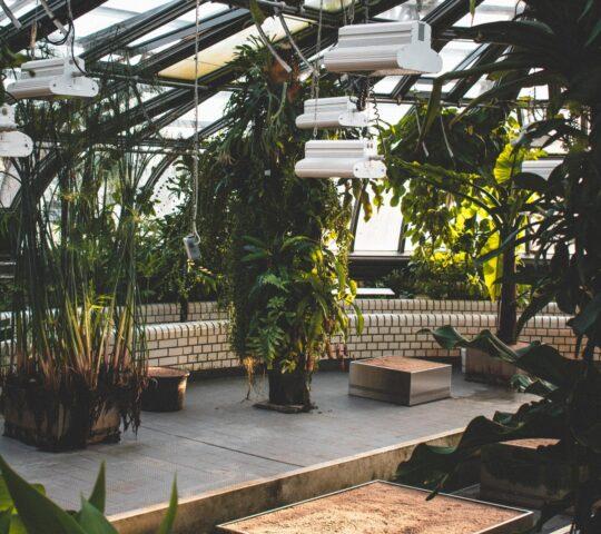 Berlin Botanik Bahçesi