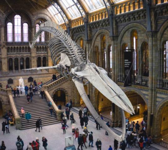 Doğa Tarihi Müzesi (Natural History Museum)