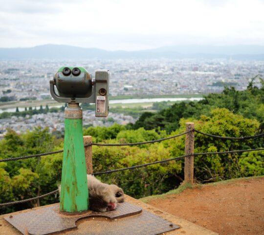 Arashiyama Maymun Parkı Iwatayama
