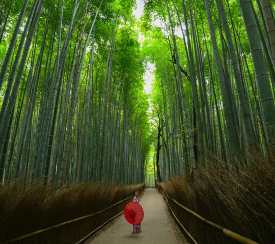 Arashiyama Bambu Korusu