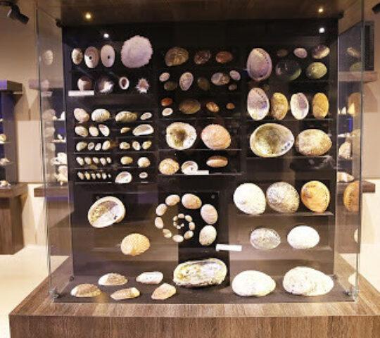 ÇOMÜ Piri Reis Deniz Müzesi